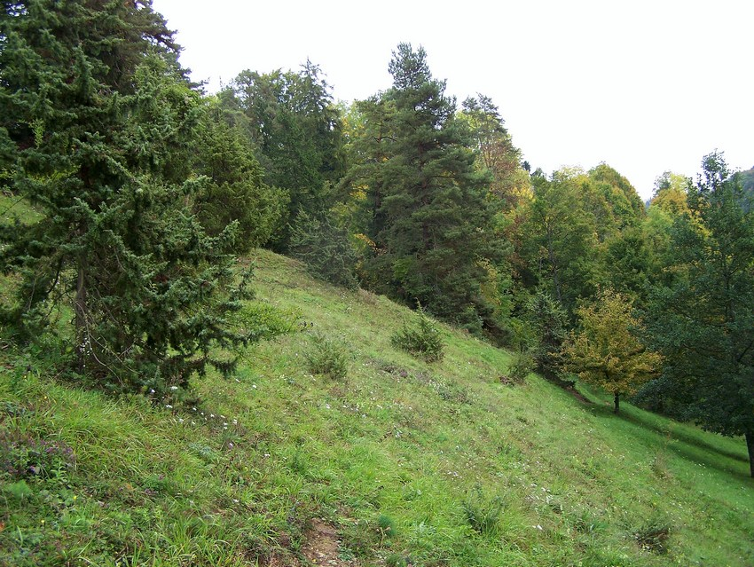 Adscita geryon for Habitat stuttgart