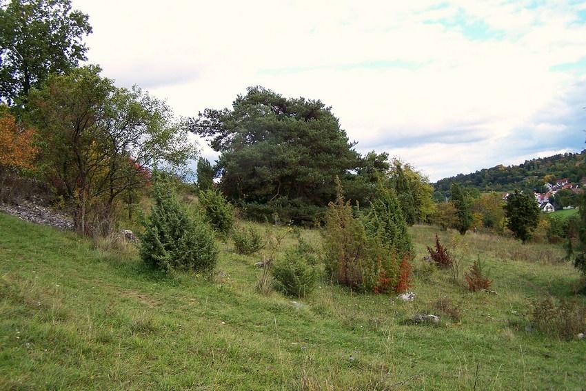 Coronella austriaca for Habitat stuttgart