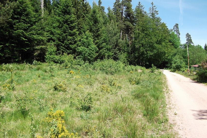 Erebia meolans for Habitat stuttgart