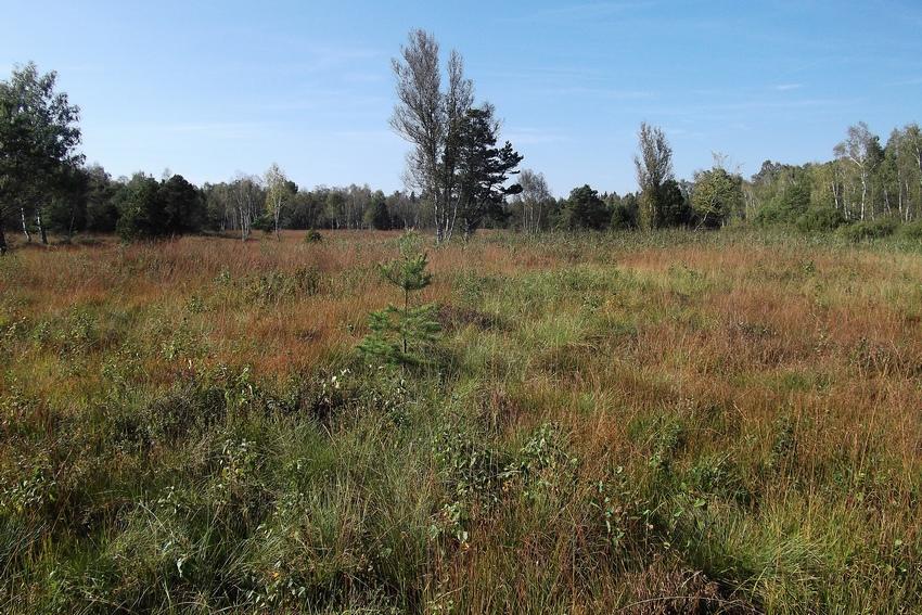 Gynaephora selenitica for Habitat stuttgart