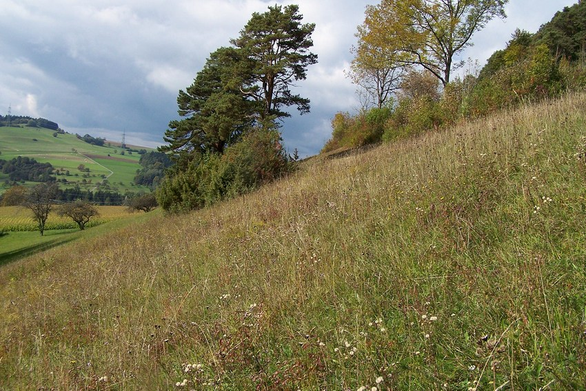 Spialia sertorius for Habitat stuttgart