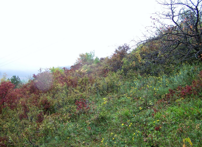 Rhagades pruni for Habitat stuttgart