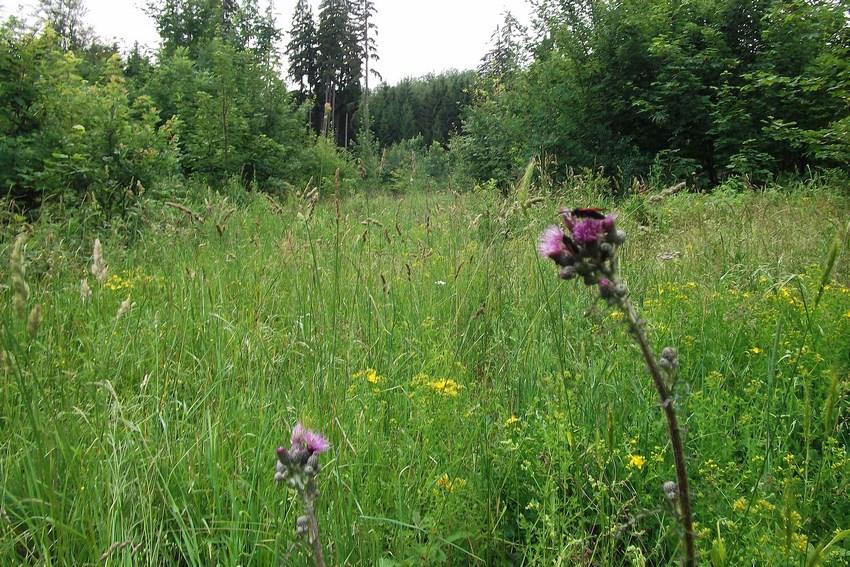 Aporia crataegi for Habitat stuttgart