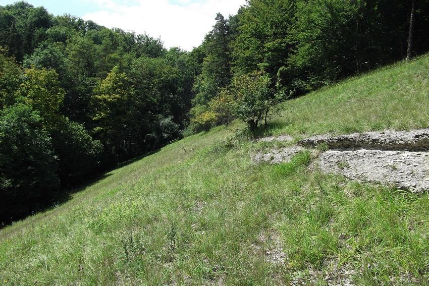 Zygaena transalpina for Habitat stuttgart
